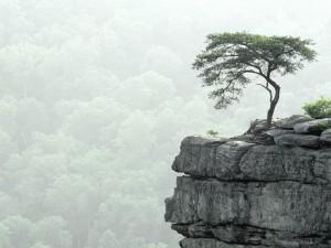 Дерево-на-скале