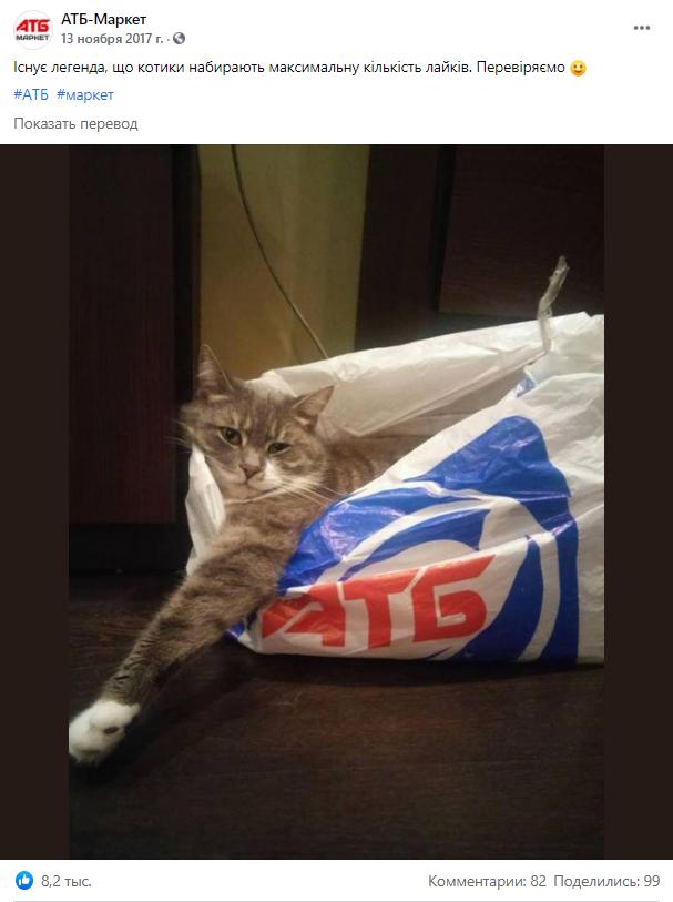 Развлекательный пост с котом в Фейсбук