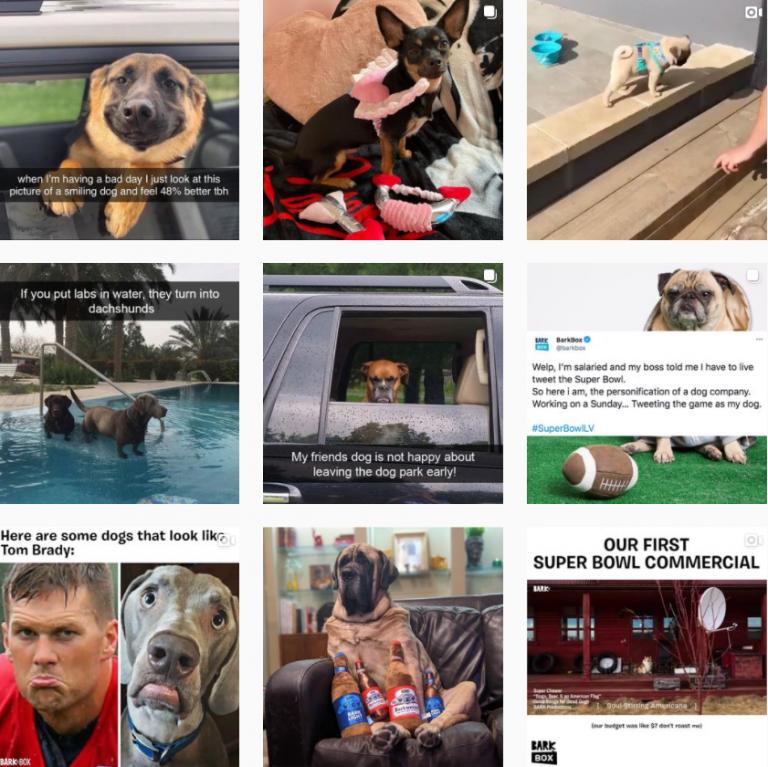 Визуал Инстаграм бренда для собак BarkBox